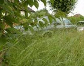 Grass Verges