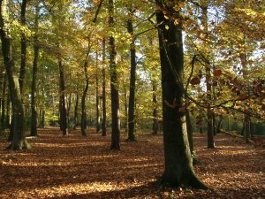 woodland_english_autumn_sunlit